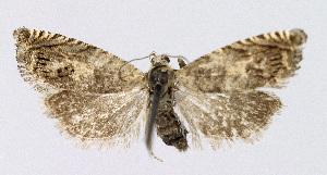 ( - KBE 2018358)  @11 [ ] Creative Commons – Attribution Non-Commercial Share-Alike (2018) Kai Berggren NTNU University Museum, Department of Natural History