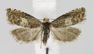 ( - KBE 2018359)  @11 [ ] Creative Commons – Attribution Non-Commercial Share-Alike (2018) Kai Berggren NTNU University Museum, Department of Natural History