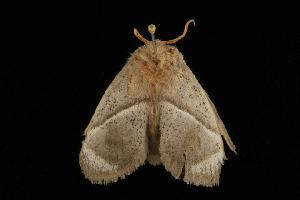 ( - Moth 061.03CC)  @13 [ ] CreativeCommons - Attribution Non-Commercial Share-Alike (2010) CBG Photography Group Centre for Biodiversity Genomics