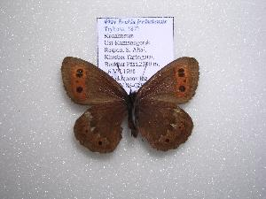 ( - 2005-LOWA-838)  @13 [ ] CreativeCommons - Attribution Non-Commercial Share-Alike (2010) CBG Photography Group Centre for Biodiversity Genomics