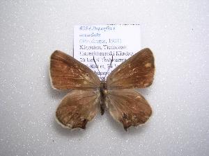 (Superflua - 2005-LOWA-254)  @14 [ ] CreativeCommons - Attribution Non-Commercial Share-Alike (2010) CBG Photography Group Centre for Biodiversity Genomics