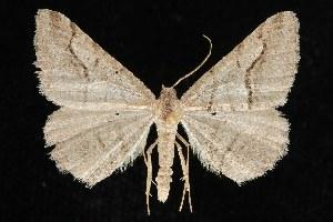 ( - CGWC-0711)  @14 [ ] CC-0 (2010) CBG Photography Group Centre for Biodiversity Genomics