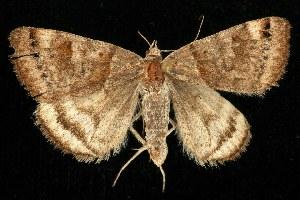 ( - CGWC-1119)  @14 [ ] CC-0 (2010) CBG Photography Group Centre for Biodiversity Genomics