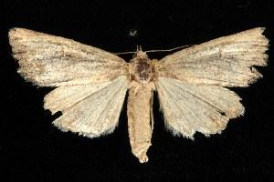 ( - CGWC-1808)  @13 [ ] CC-0 (2010) CBG Photography Group Centre for Biodiversity Genomics