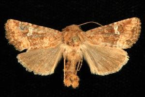( - CGWC-1951)  @13 [ ] CC-0 (2010) CBG Photography Group Centre for Biodiversity Genomics