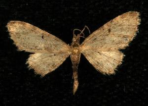 ( - CGWC-2627)  @14 [ ] CC-0 (2010) CBG Photography Group Centre for Biodiversity Genomics