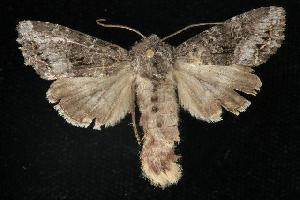 ( - CGWC-3577)  @13 [ ] CC-0 (2010) CBG Photography Group Centre for Biodiversity Genomics
