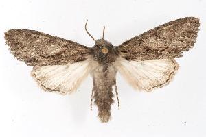 (Fishia discors - CGWC-3751)  @15 [ ] CC-0 (2010) CBG Photography Group Centre for Biodiversity Genomics