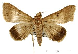 (Plecoptera{Genus_moth - USNM ENT 00733797)  @14 [ ] Unspecified (default): All Rights Reserved  Unspecified Unspecified