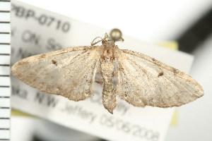 ( - PPBP-0710)  @13 [ ] CC-0 (2008) CBG Photography Group Centre for Biodiversity Genomics