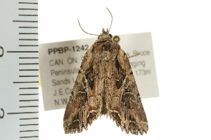 ( - PPBP-1242)  @13 [ ] CC-0 (2008) CBG Photography Group Centre for Biodiversity Genomics