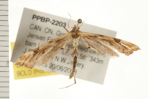 ( - PPBP-2203)  @13 [ ] CC-0 (2008) CBG Photography Group Centre for Biodiversity Genomics