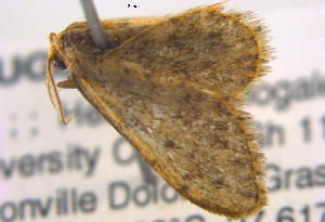 (Idaea torrida - BIOUG06206-G01)  @12 [ ] CreativeCommons - Attribution Non-Commercial Share-Alike (2012) CBG Photography Group Centre for Biodiversity Genomics