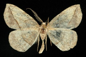 ( - 06-JKA-0283)  @14 [ ] CreativeCommons - Attribution Non-Commercial Share-Alike (2010) CBG Photography Group Centre for Biodiversity Genomics