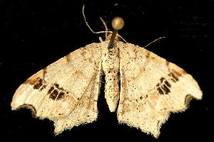 ( - 06-JKA-0686)  @13 [ ] CreativeCommons - Attribution Non-Commercial Share-Alike (2010) CBG Photography Group Centre for Biodiversity Genomics
