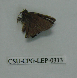 ( - CSU-CPG-LEP-0313)  @13 [ ] Copyright (2009) Paul Opler Colorado State University