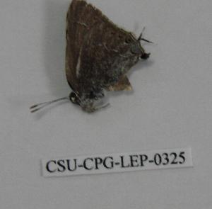( - CSU-CPG-LEP-0325)  @13 [ ] Copyright (2009) Paul Opler Colorado State University