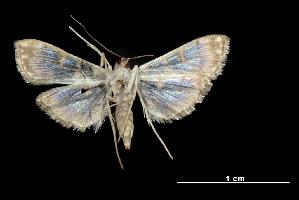 (Synclera jarbusalis - MAL-03210)  @15 [ ] Unspecified (default): All Rights Reserved  Unspecified Unspecified