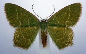 ( - jflandry0382)  @14 [ ] Copyright (2007) Jean-Francois Landry Canadian National Collection