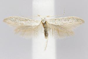 ( - BIRD18976)  @14 [ ] Copyright (2007) Jean-Francois Landry Canadian National Collection