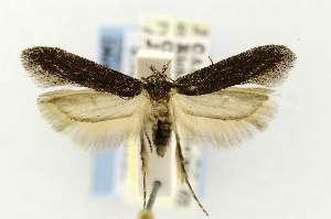 ( - EMEC331026)  @13 [ ] Copyright (2012) Unspecified Essig Museum of Entomology
