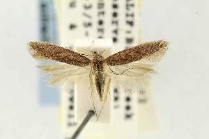 ( - EMEC331038)  @11 [ ] Copyright (2012) Unspecified Essig Museum of Entomology