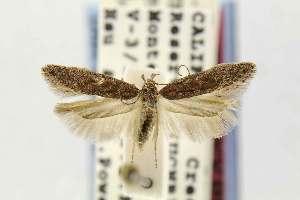 ( - EMEC68927)  @11 [ ] Copyright (2012) Unspecified Essig Museum of Entomology