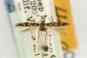 ( - EMEC80281)  @11 [ ] Copyright (2012) Unspecified Essig Museum of Entomology