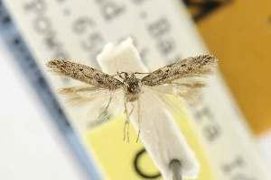 (Insuloschema - EMEC82311)  @12 [ ] Copyright (2012) Unspecified Essig Museum of Entomology