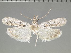 ( - JEH20151104E)  @14 [ ] Copyright (2016) James E. Hayden Florida State Collection of Arthropods