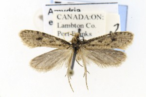 ( - CNCLEP00121744)  @12 [ ] CreativeCommons - Attribution Non-Commercial Share-Alike (2015) Jean-Francois Landry Canadian National Collection of Insects, Arachnids and Nematodes