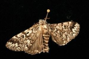 ( - HBL008652)  @13 [ ] CC-0 (2010) CBG Photography Group Centre for Biodiversity Genomics