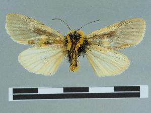 (Eudaphaenura - CCDB-08662-B09)  @11 [ ] CreativeCommons - Attribution Non-Commercial Share-Alike (2014) Muséum national d'Histoire naturelle Muséum national d'Histoire naturelle