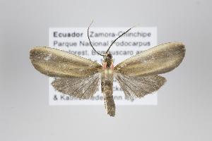 (Diarhabdosia - Arcec 30205)  @13 [ ] Copyright (2013) Gunnar Brehm Institut fuer Spezielle Zoologie und Evolutionsbiologie, Friedrich-Schiller Universität Jena