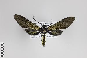 ( - Arcec 30222)  @13 [ ] Copyright (2013) Gunnar Brehm Institut fuer Spezielle Zoologie und Evolutionsbiologie, Friedrich-Schiller Universität Jena