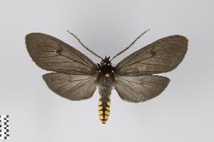 (Pseudapistosia - Arcec 30339)  @14 [ ] Copyright (2013) Gunnar Brehm Institut fuer Spezielle Zoologie und Evolutionsbiologie, Friedrich-Schiller Universität Jena