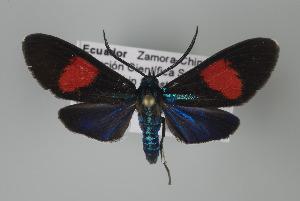 ( - Arcec 32108)  @14 [ ] Copyright (2010) Gunnar Brehm Institut fuer Spezielle Zoologie und Evolutionsbiologie, Friedrich-Schiller Universitat Jena