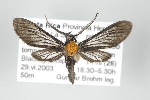 (Sauritinia - ArcCR 40139)  @14 [ ] Copyright (2010) Gunnar Brehm Institut fuer Spezielle Zoologie und Evolutionsbiologie, Friedrich-Schiller Universitat Jena