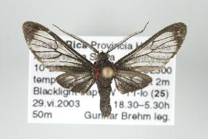(Psilopleura - ArcCR 40166)  @15 [ ] Copyright (2010) Gunnar Brehm Institut fuer Spezielle Zoologie und Evolutionsbiologie, Friedrich-Schiller Universitat Jena