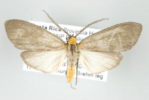 (Tricypha - ArcCR 42042)  @15 [ ] Copyright (2010) Gunnar Brehm Institut fuer Spezielle Zoologie und Evolutionsbiologie, Friedrich-Schiller Universitat Jena
