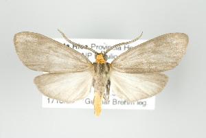 (Tricypha - ArcCR 42043)  @15 [ ] Copyright (2010) Gunnar Brehm Institut fuer Spezielle Zoologie und Evolutionsbiologie, Friedrich-Schiller Universitat Jena