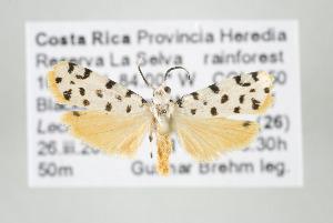 (Epeiromulona thysanata - ArcCR 42387)  @13 [ ] Copyright (2010) Gunnar Brehm Institut fuer Spezielle Zoologie und Evolutionsbiologie, Friedrich-Schiller Universitat Jena