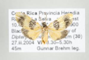 (Illice croesus - ArcCR 42393)  @13 [ ] Copyright (2010) Gunnar Brehm Institut fuer Spezielle Zoologie und Evolutionsbiologie, Friedrich-Schiller Universitat Jena