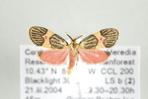 ( - ArcCR 42413)  @13 [ ] Copyright (2010) Gunnar Brehm Institut fuer Spezielle Zoologie und Evolutionsbiologie, Friedrich-Schiller Universitat Jena