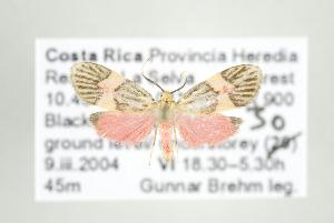 ( - ArcCR 42414)  @13 [ ] Copyright (2010) Gunnar Brehm Institut fuer Spezielle Zoologie und Evolutionsbiologie, Friedrich-Schiller Universitat Jena