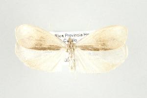 (Disaulota leptalina - ArcCR 42439)  @13 [ ] Copyright (2010) Gunnar Brehm Institut fuer Spezielle Zoologie und Evolutionsbiologie, Friedrich-Schiller Universitat Jena