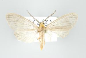 (Agaraea boettgeri - ArcCR 42703)  @13 [ ] Copyright (2010) Gunnar Brehm Institut fuer Spezielle Zoologie und Evolutionsbiologie, Friedrich-Schiller Universitat Jena