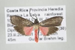 (Talara sp nr minynthadia - ArcCR 42751)  @14 [ ] Copyright (2010) Gunnar Brehm Institut fuer Spezielle Zoologie und Evolutionsbiologie, Friedrich-Schiller Universitat Jena