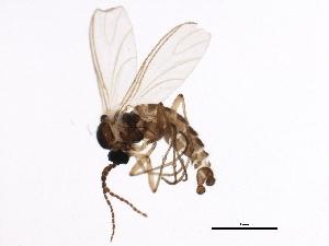 ( - BIOUG01666-E01)  @12 [ ] CC-0 (2012) CBG Photography Group Centre for Biodiversity Genomics