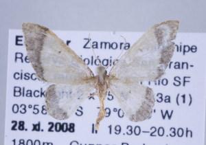 ( - ID 17245)  @13 [ ] Copyright (2010) Gunnar Brehm Institut fuer Spezielle Zoologie und Evolutionsbiologie, Friedrich-Schiller Universitat Jena